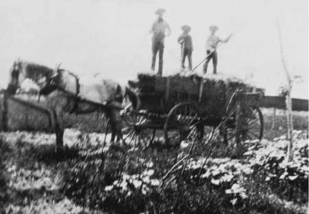 Spencer (middle) and his brother Gordon and Del on top a wagon working on family farm near home.