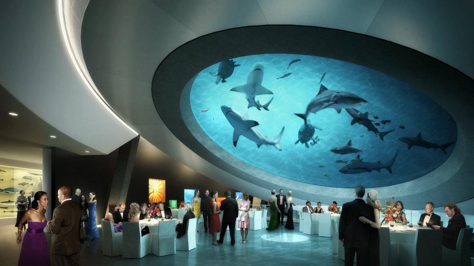 Under the oculus of the aquarium.