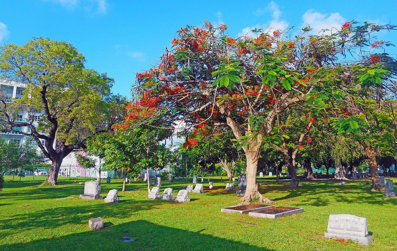 Miami City Cemetery is notable for its graves as well as its landscaping, which is comparative to a botanical garden. Wikimedia Commons.