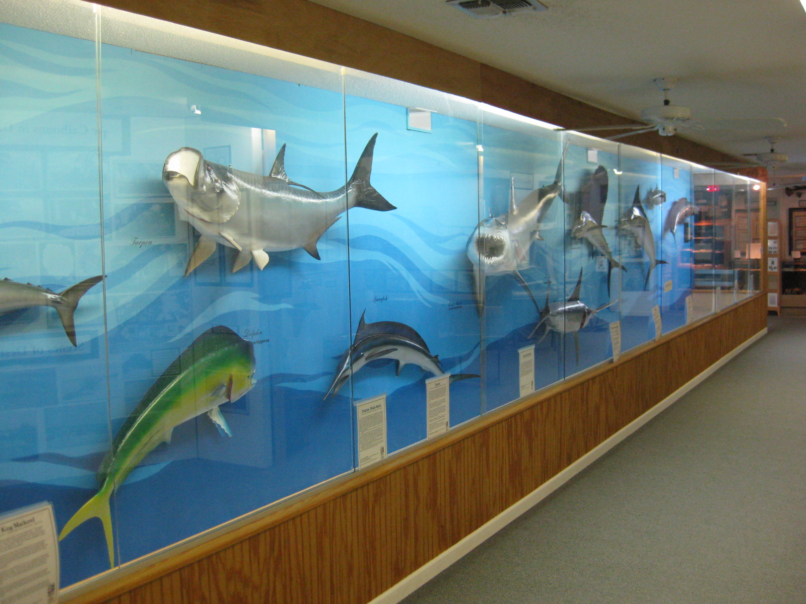 The wall displaying fish that inhabit the Gulf of Mexico