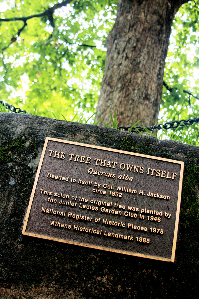 Is it a picture of one of the plaques that surrounds The Tree That Owns Itself.