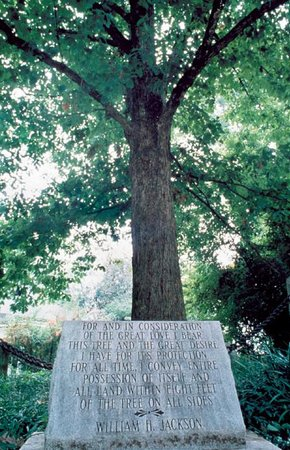 There are two tablets placed around The Tree That Owns Itself, one older and one considerably newer, and they both have the deed inscribed in them.