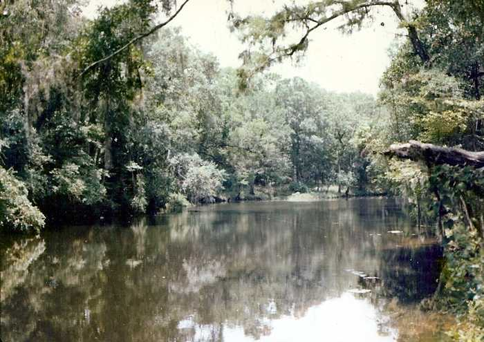Ecosystem of the Steinhatchee River