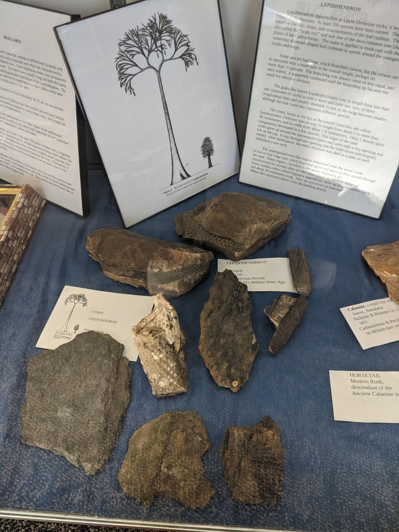 Organism, Wood, Font, Artifact