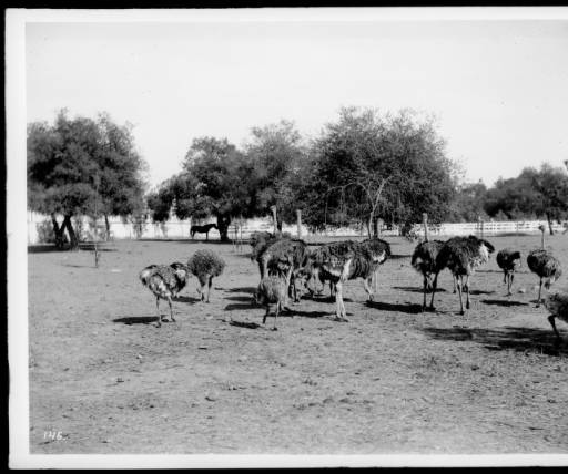 Cawston's Farm in 1903 (www.image-archeology.com)