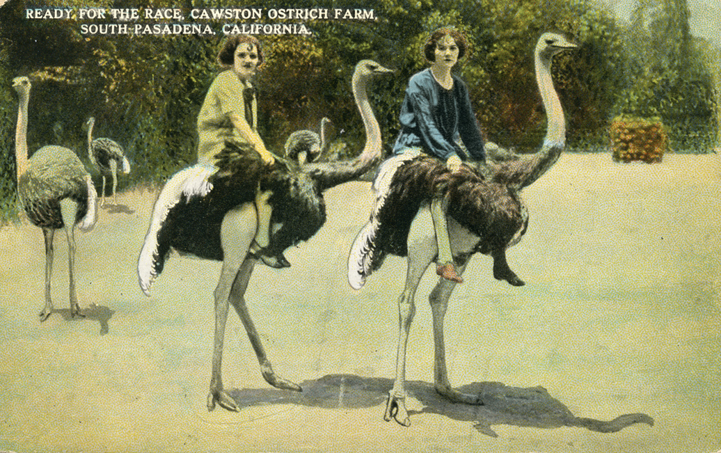 Having one's picture taken riding ostriches (www.image-archeology.com)