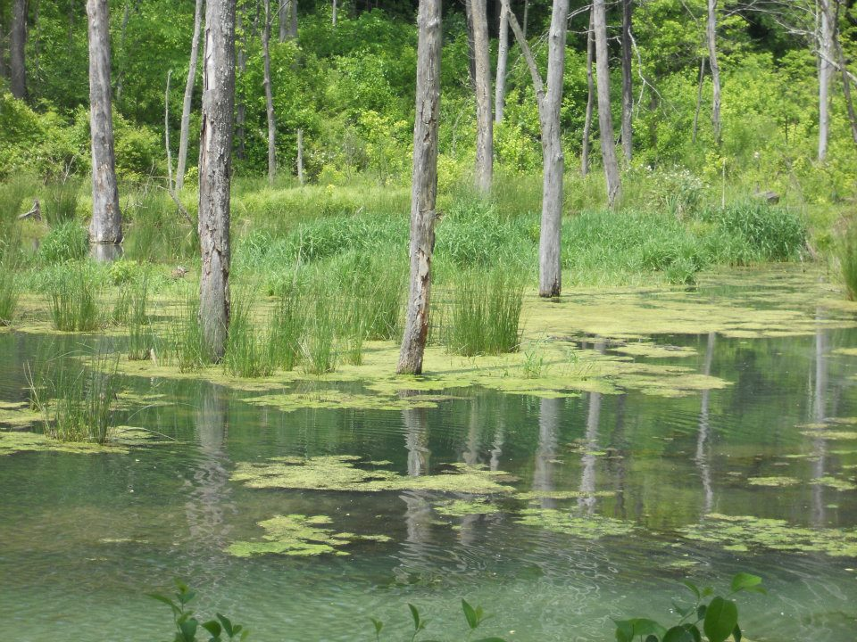 Wetlands at Leonard Springs