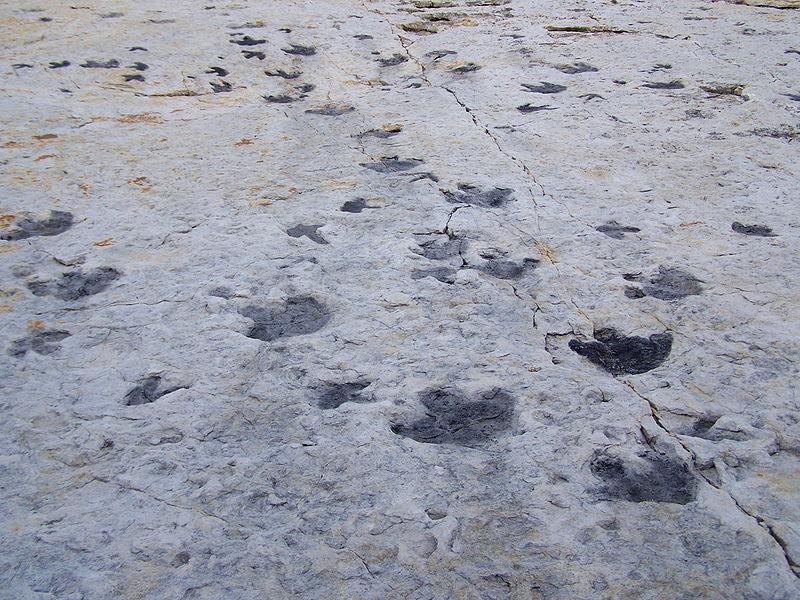 Tracks at Dinosaur Ridge.