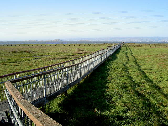 This trail extends from the Lucy Evans Baylands Nature Interpretive Center