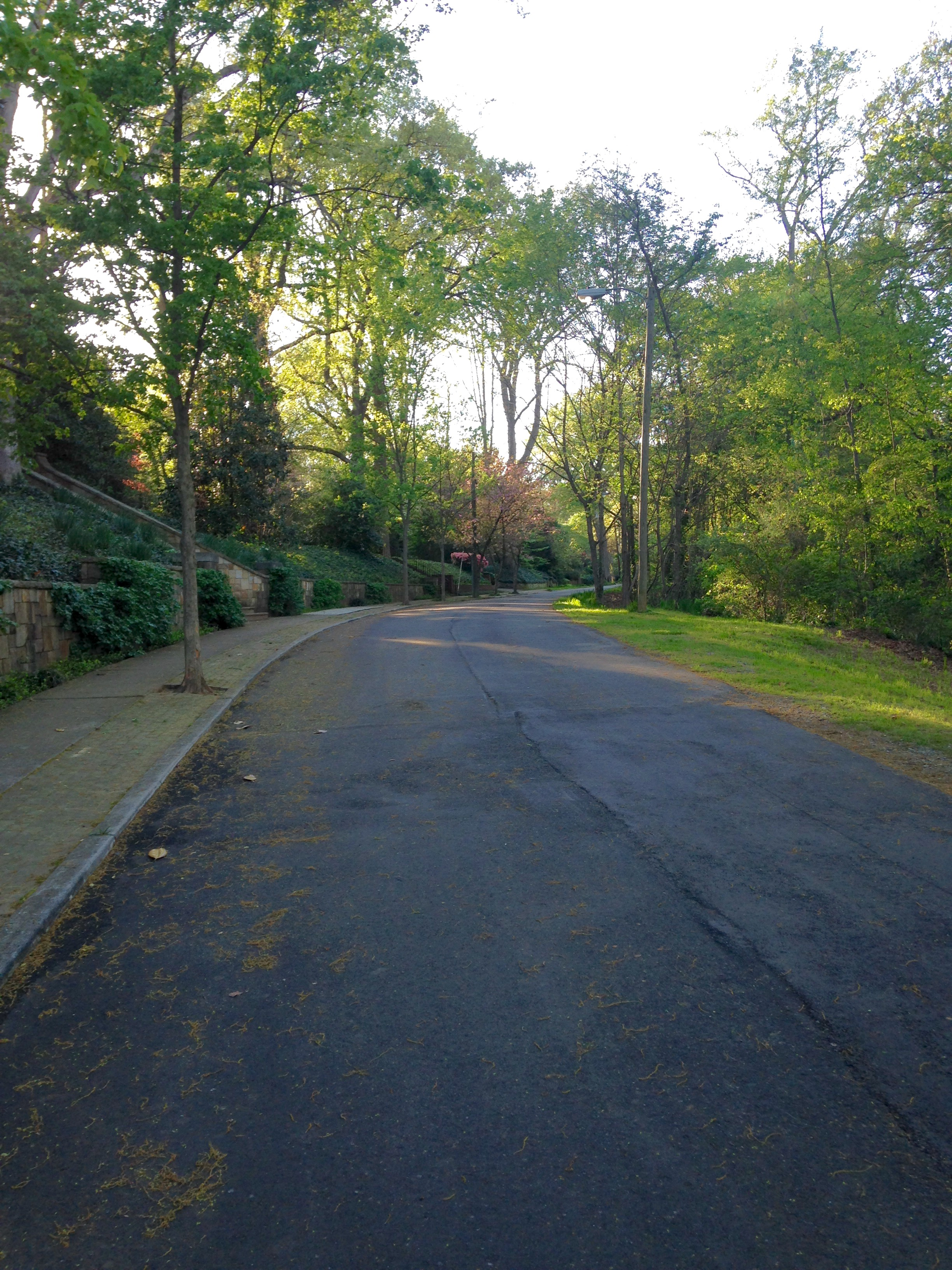 Curved street, Holt Drive.