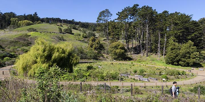El Polín Spring, recently restored by the Presidio Trust (image from National Park Service, Presidio)