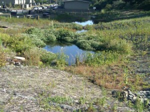 Restored ponds at the spring (image from Golden Gate Audubon Society)
