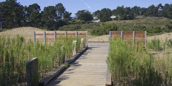 The Marine Cemetery Vista (image from National Parks Service, Presidio)