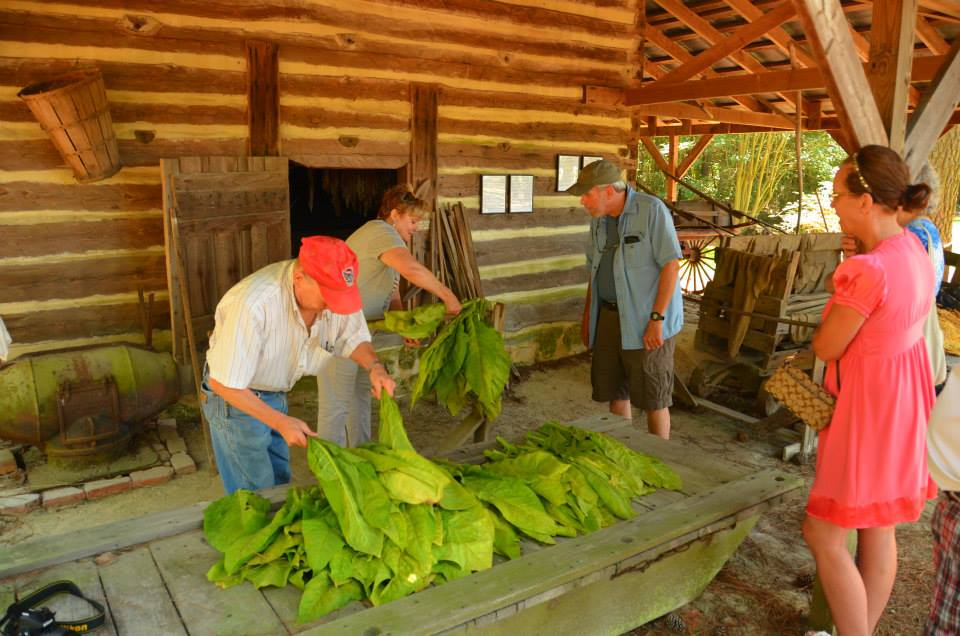 Tobacco Farm Life Museum's annual tobacco stringing and hanging.
