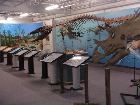 The dinosaur exhibit