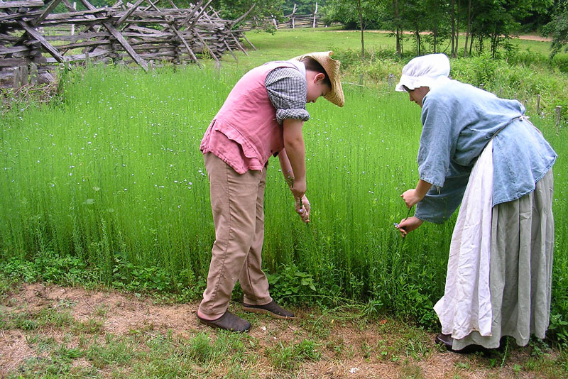 Volunteers in traditional garb growing crops