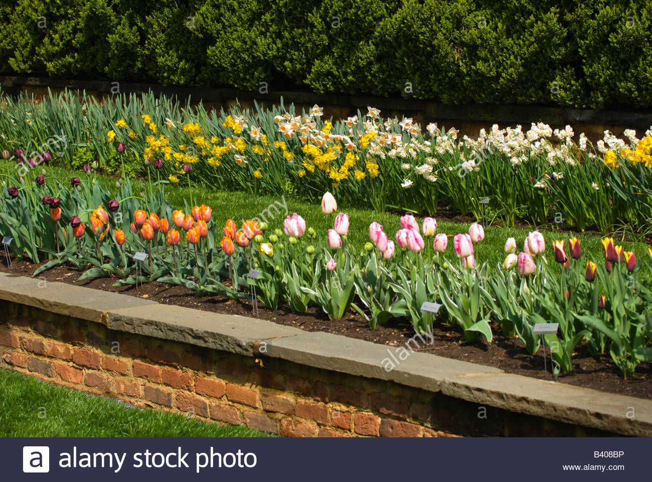 Flowers at Agecroft