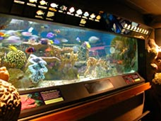 Coral Reef Exhibit (image from The New England Aquarium)