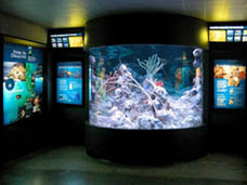 Sea Dragons Exhibit (image from The New England Aquarium)