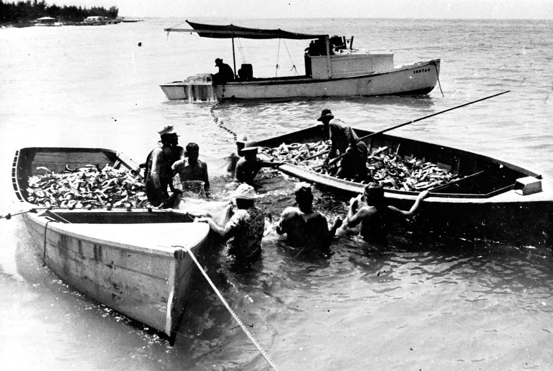 Cortez fishermen load their skiffs with mullet in the 1950s.