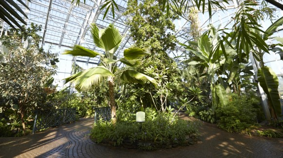 Lena Meijer Tropical Conservatory
