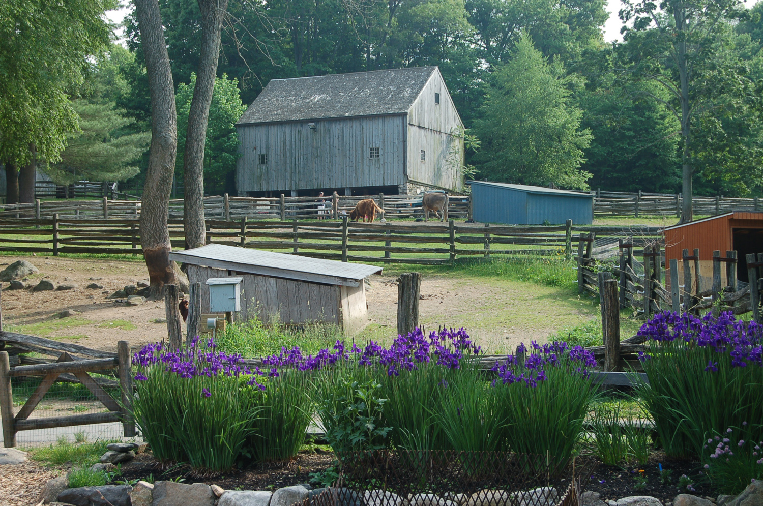 Cheshire Barn on the Heckscher Farm