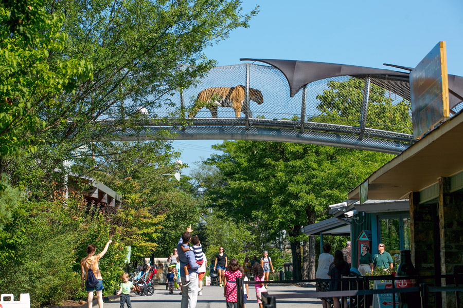Philadelphia Zoo - Zoo 360 Big Cat Crossing (image from Visit Philly)