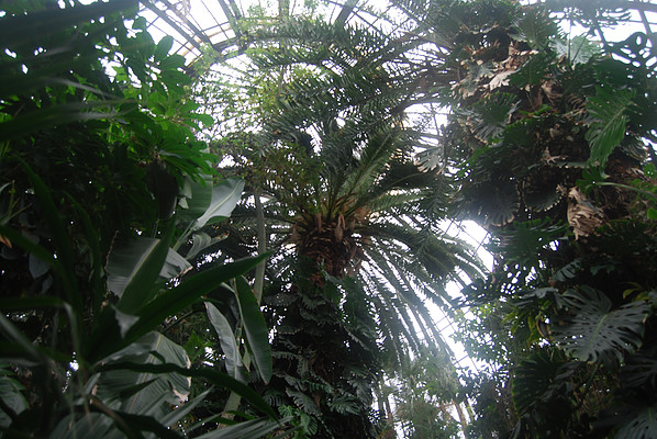 View inside the Palm House dome
