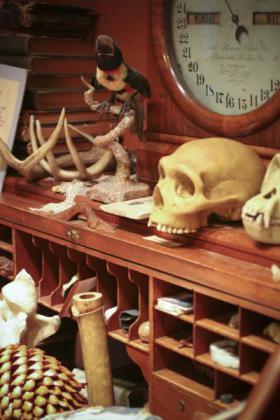 Curator's Workshop area in the EcoTarium Collections (image from EcoTarium)
