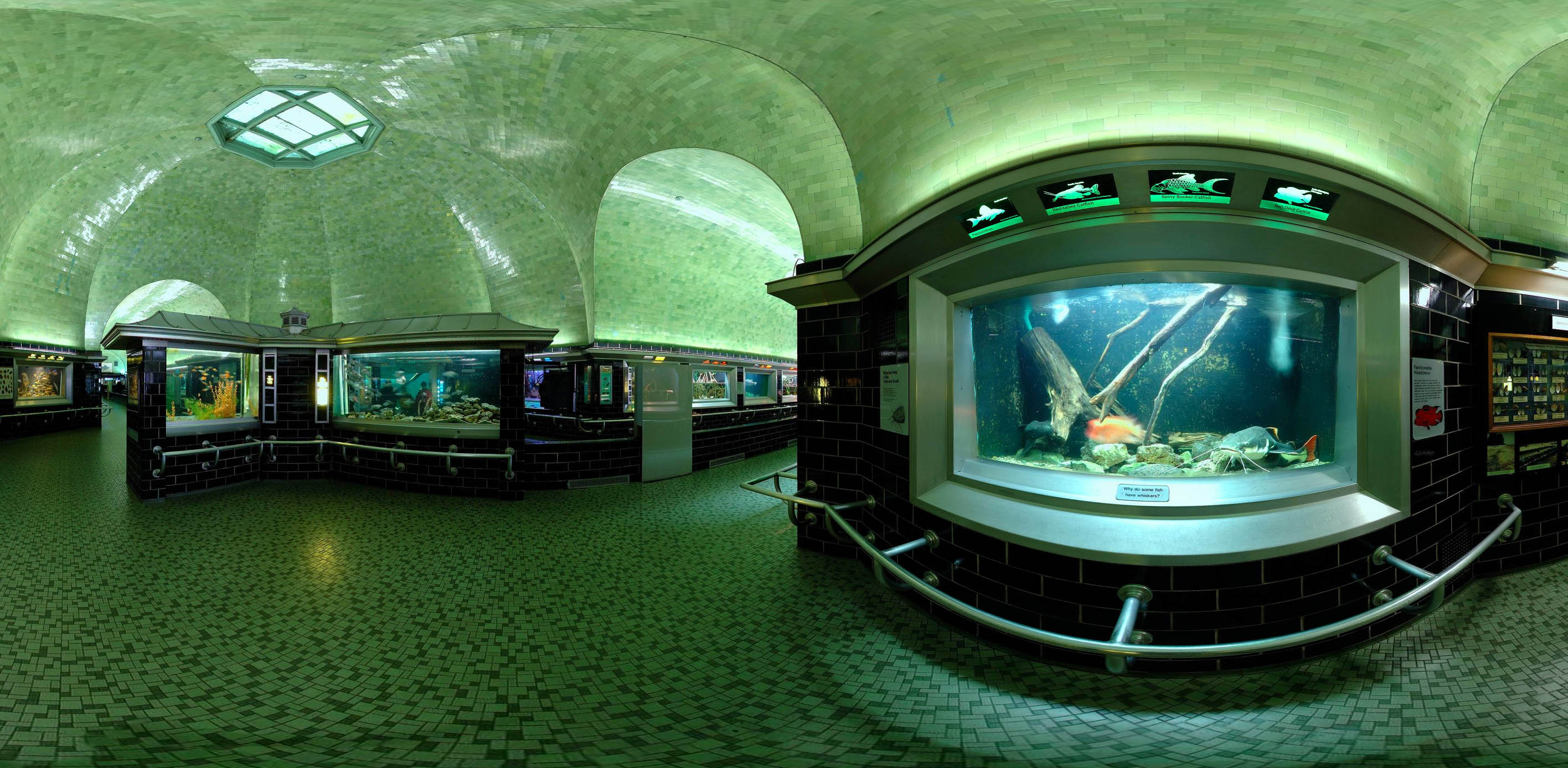 The aquarium's tanks and its green glass tile, designed by Albert Kahn