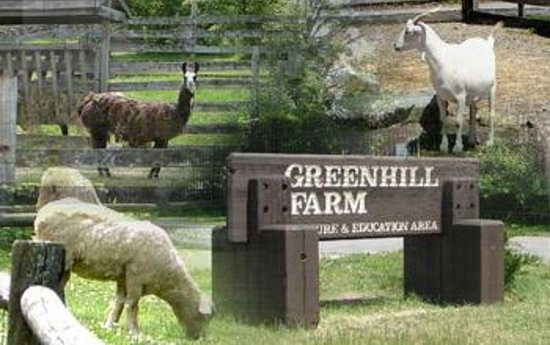 Green Hill Park Farm (image from Trip Advisor)