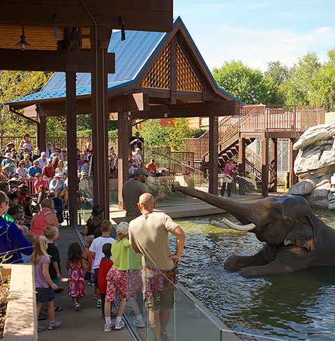 Toyota Elephant Passage (image from the Denver Zoo)