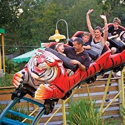 Tiger Rollar coaster at the zoo