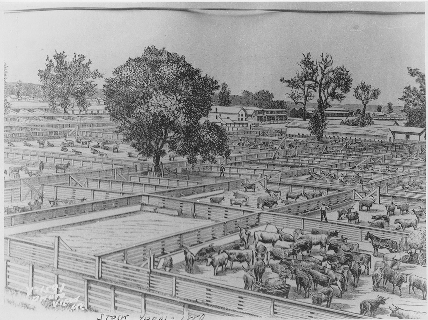 Drawing of livestock pens in 1880