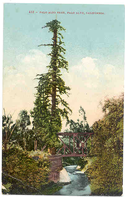 This image of the famous tree in 1910 shows it suffering as a result of soot from coal-powered trains.