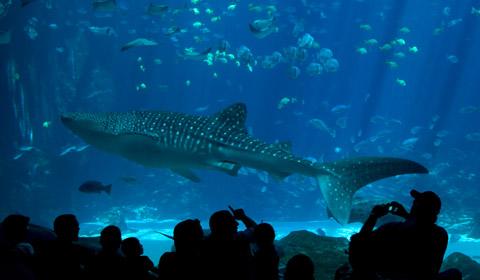 Marine Animal tank (image from Travelodge Seattle Center)