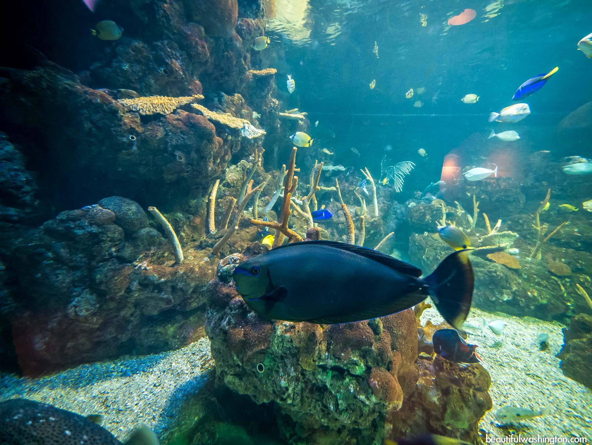 Tank at the Seattle Aquarium (image from Beautiful Washington)