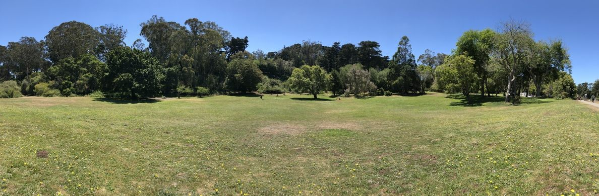 Panorama of all 13 Trees in the Colonial Trees Grove