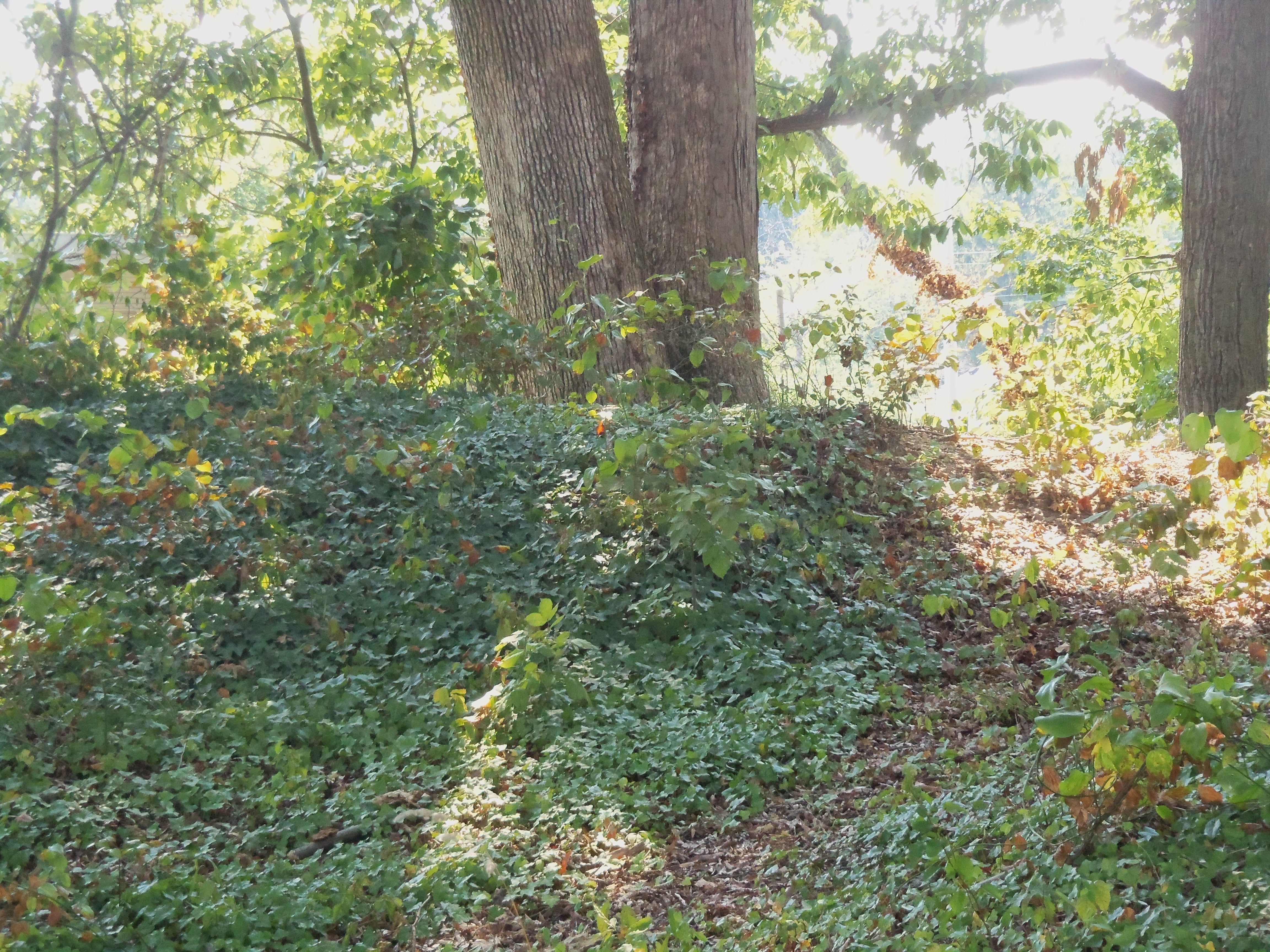 An overgrown portion of the remains of Fort Ethan Allen ((By Farragutful (Own work) [CC BY-SA 3.0 (http://creativecommons.org/licenses/by-sa/3.0)], via Wikimedia Commons))