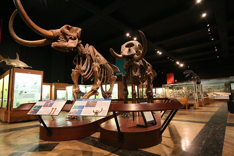 Mastodons in the Hall of Evolution