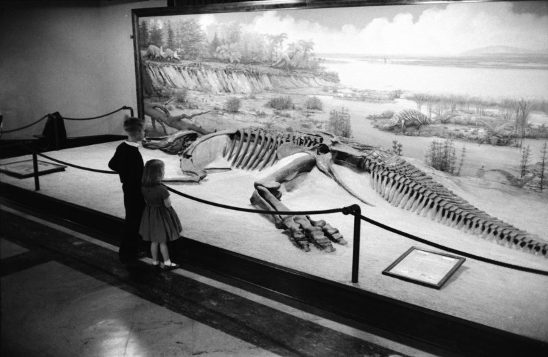 Kids have loved visiting the dinosaur displays since the museum opened.