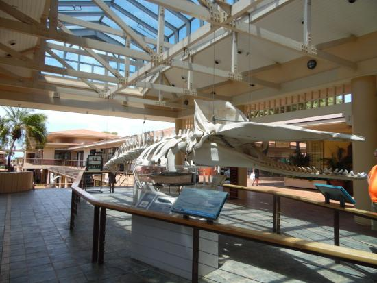 The sperm whale skeleton near the museum entrance