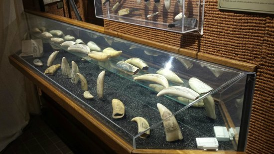 Some of the scrimshaw on display