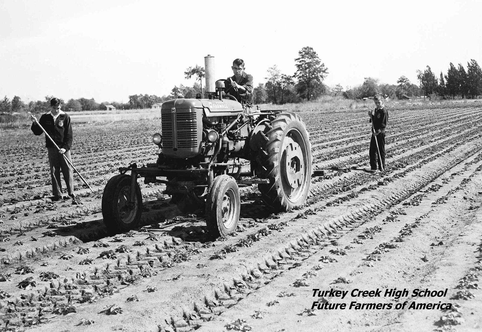 Students in the FFA work in the strawberry fields, early 1950s.