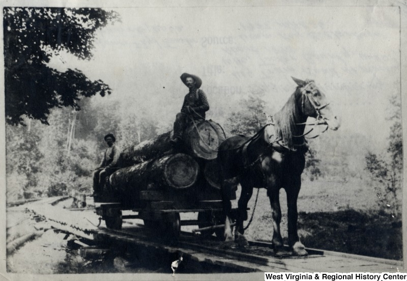 Example of Collections: Log Tram Road at Mackeyville, Tucker County, W. Va. ca. 1893 IDNO: 000048