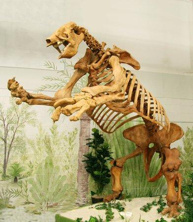 Giant Ground Sloth Skeleton