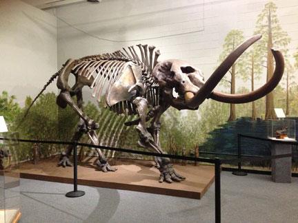 Replica Mastodon Skeleton