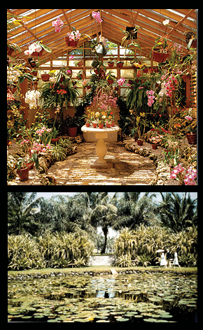 The gardens are a place of tropical tranquility, where it houses five distinct ecosystems. One of the most popular of the gardens includes a large collection of orchids due to Evelyn Barletts' passion for them.
