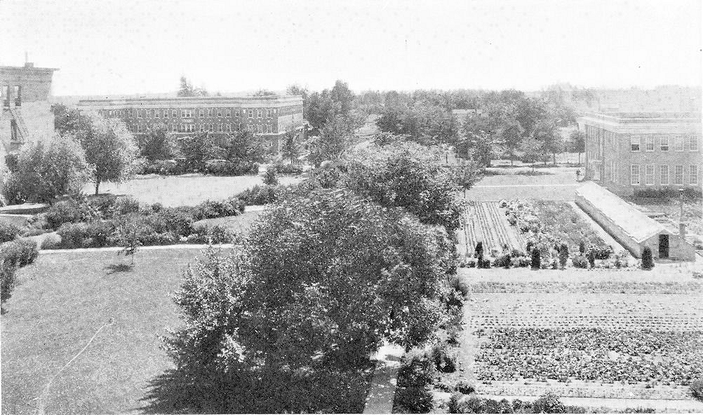 In the 1920s there were school vegetable gardens between the Training School and Manual Arts building.