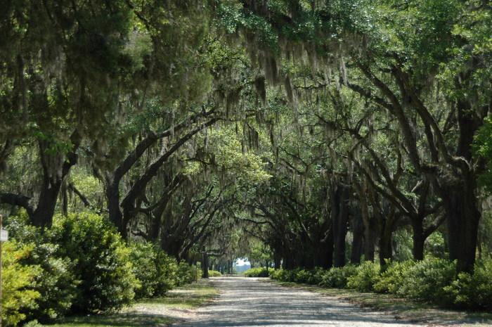 The oak-lined streets are a key attraction to the cemetery.